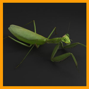 praying mantis 3d model