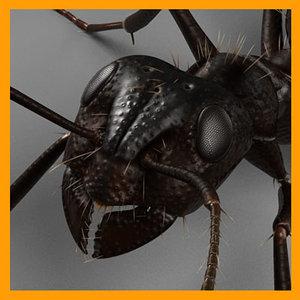 3d max black ant