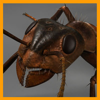3d model red ant