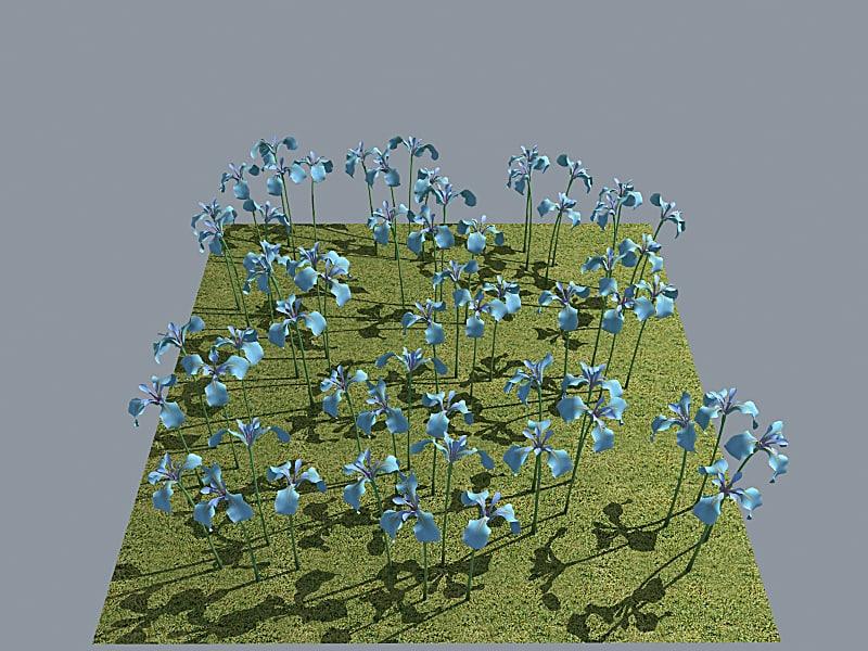 flower iris blue 3d model