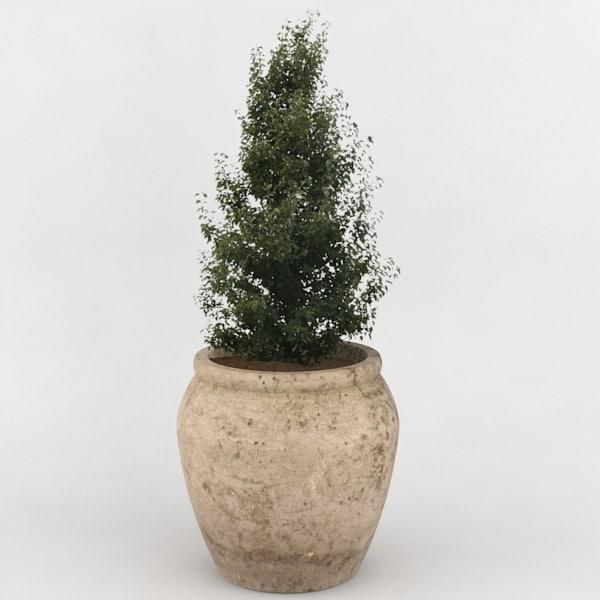 3d decorative pot plant