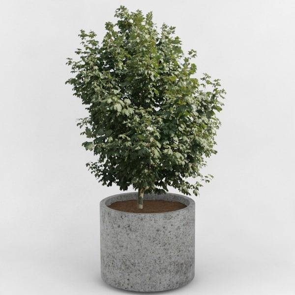 decorative pot plant 3d obj