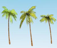 3d model palm trees