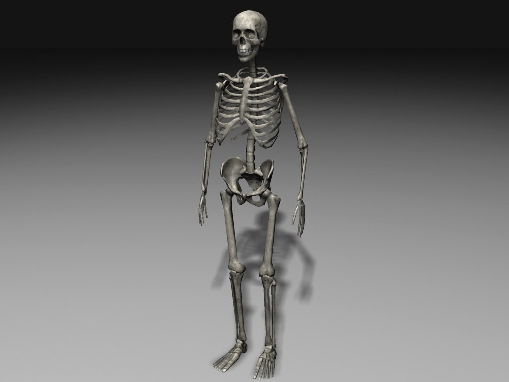 3ds human skeleton