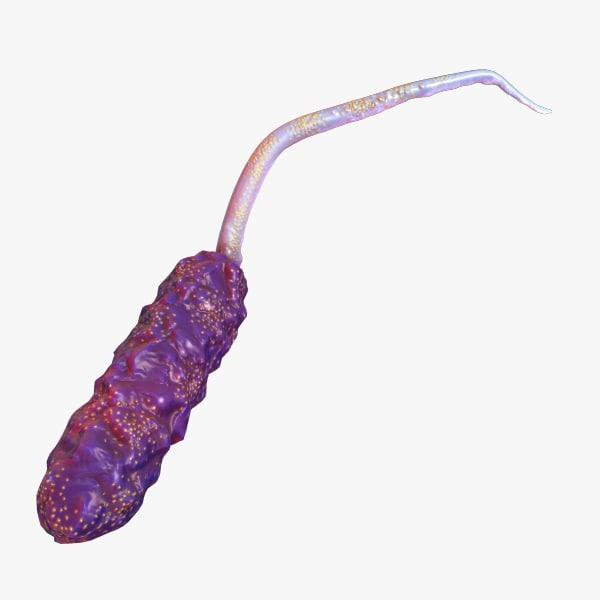max vibrio bacteria