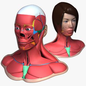 head anatomy male female 3d 3ds
