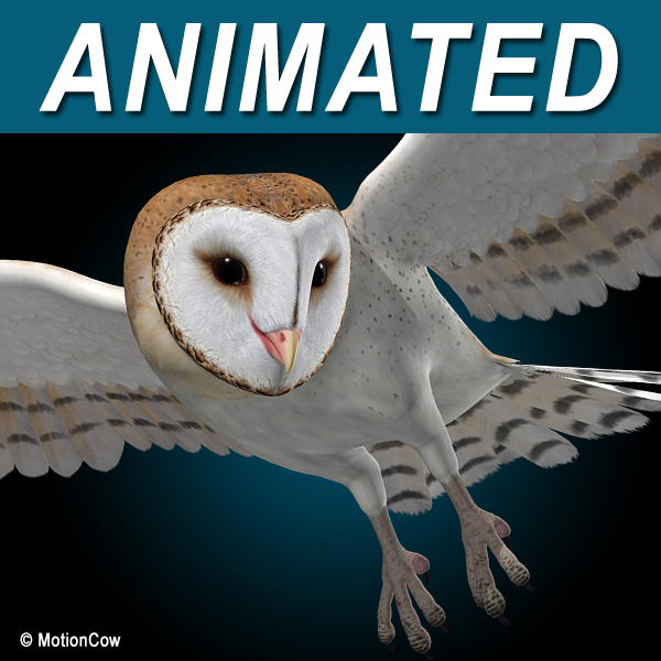 realistic flying barn owl 3d c4d