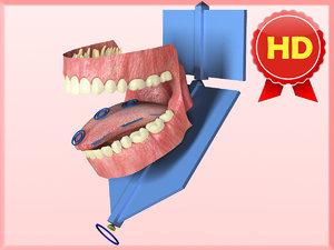 anatomically correct gums teeth max