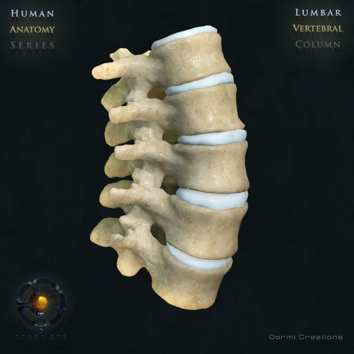3ds max vertebral column lumbar vertebra