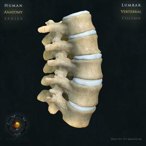 3d model vertebral column lumbar vertebra