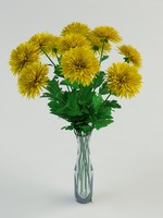 3d mums chrysanthemums model