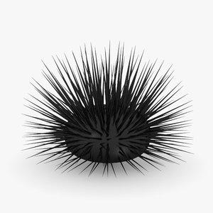 maya sea urchin