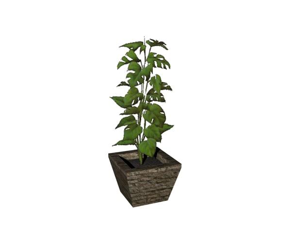 3d monstera plant pot
