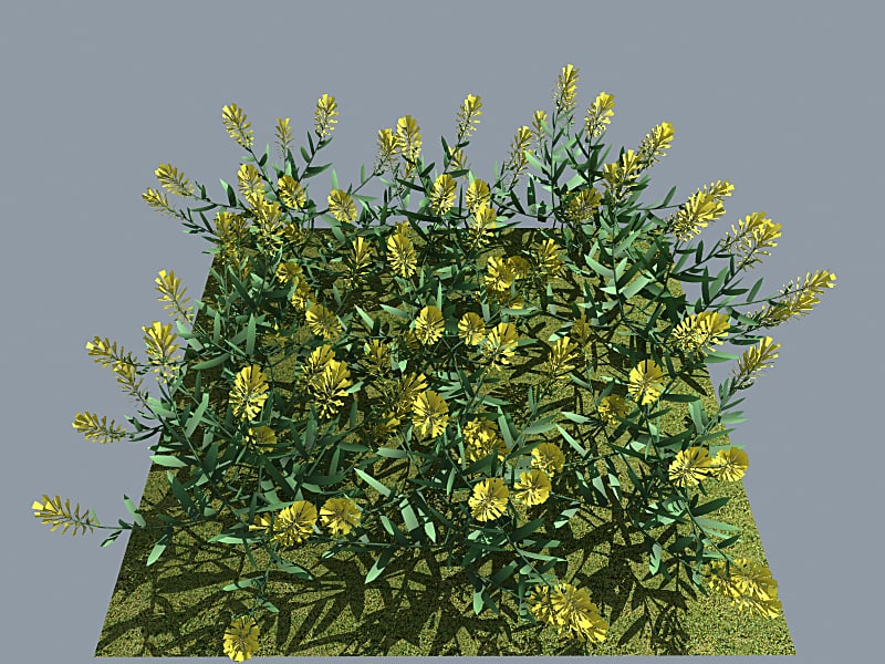 3d flower vinca yellow model
