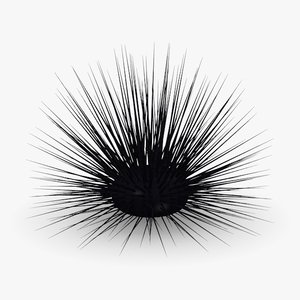 3d model of sea urchin