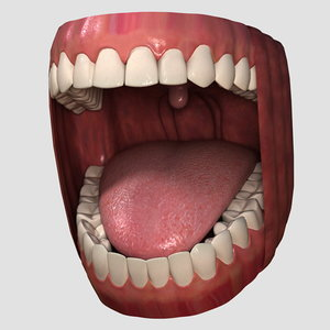 3ds realistic teeth 01 tongue