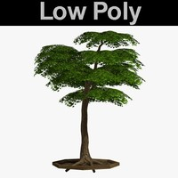 3d model of tree pl