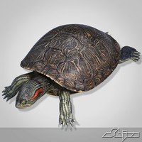 Turtle  red-eared