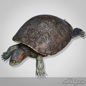 3d turtle red-eared