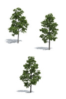 Acacia trees 3-in-1 by 3dmentor