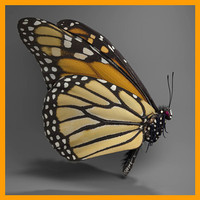 monarch butterfly 3d ma