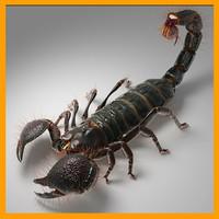 ma emperor scorpion
