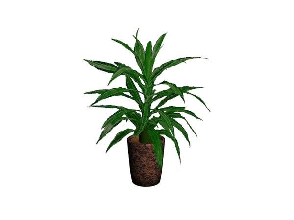 3ds max dracaena plant pot
