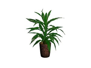 3ds max dracaena plant pot