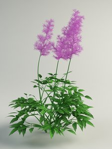 3d astilbe flower model