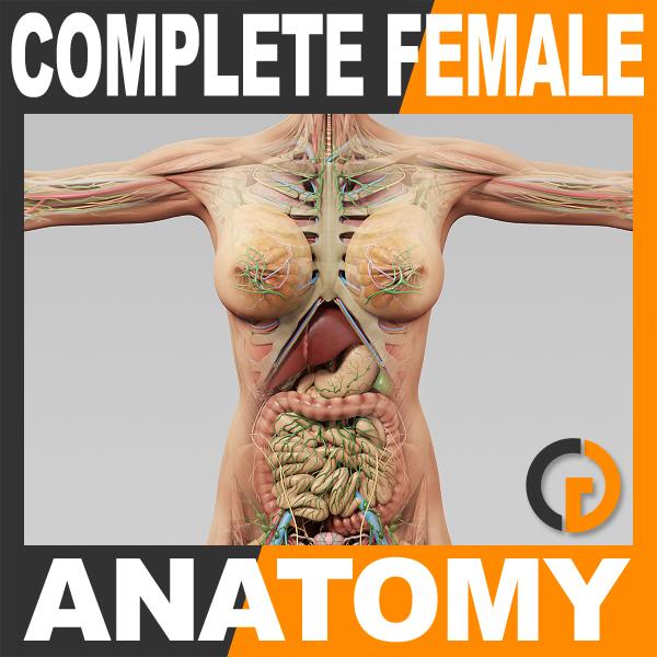 dxf human female anatomy -