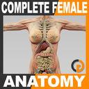 Human Female Anatomy - Body, Muscles, Skeleton, Internal Organs and Lymphatic