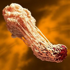 macrophage bacterium c4d
