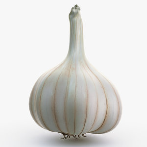 3d model garlic use