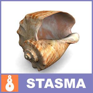 3d rapana mollusc