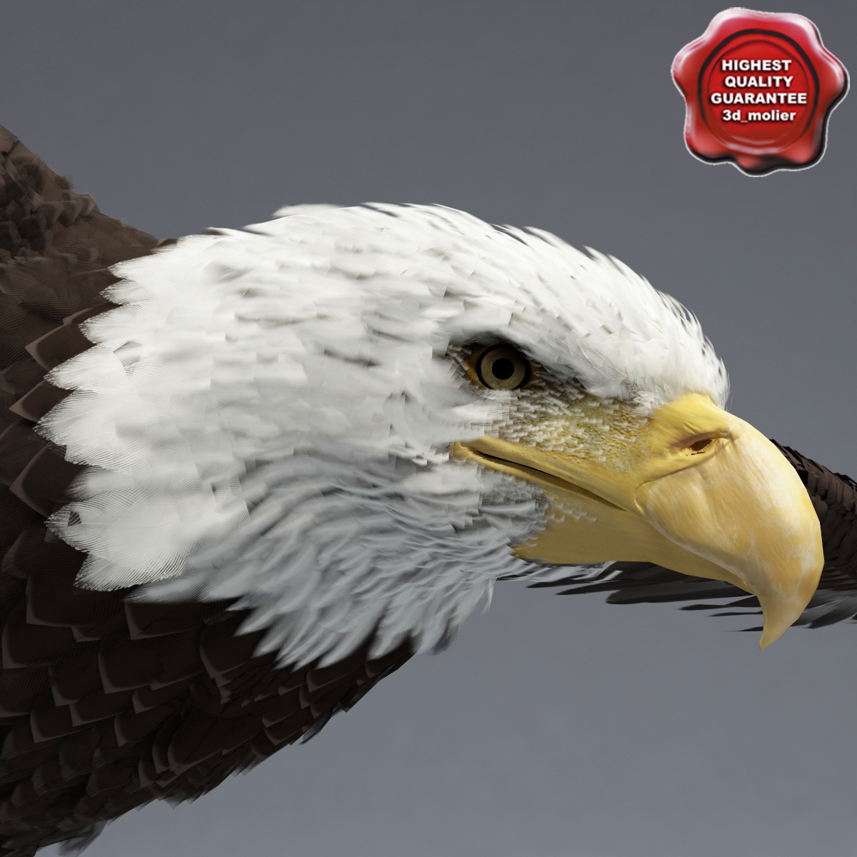 bald eagle pose 2 3ds