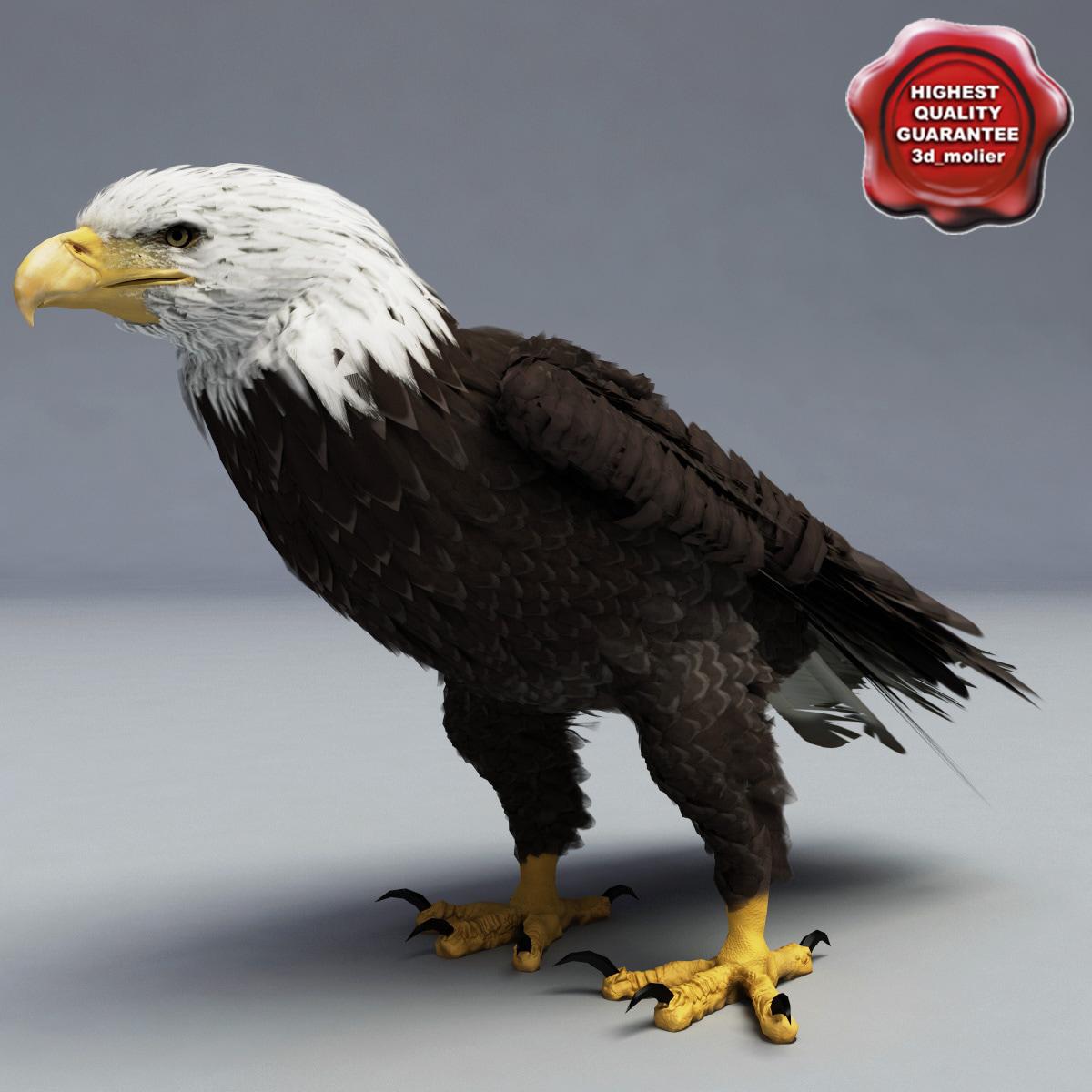3d bald eagle pose 6 model