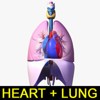 heart lung 3d max