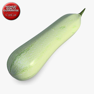 3ds squash vegetable