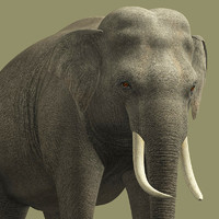 Elephant-G
