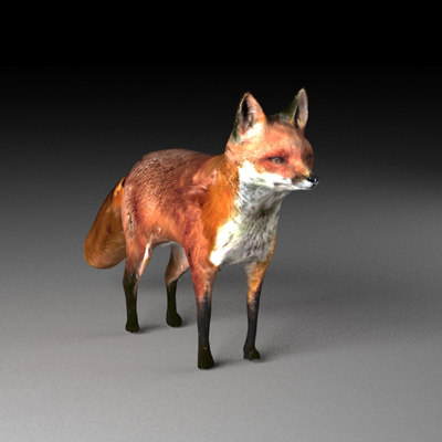 3d fox zorro