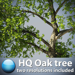 3d model oak tree hq