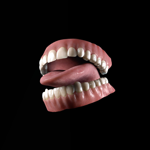 realistic human teeth 3d model