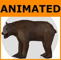 Animated Bear