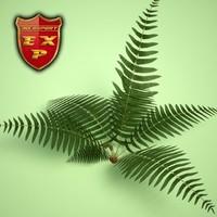 ferns wetland plantings 3d max