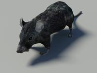 rat  3d low poly model