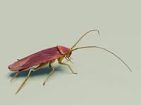 cockroach low poly