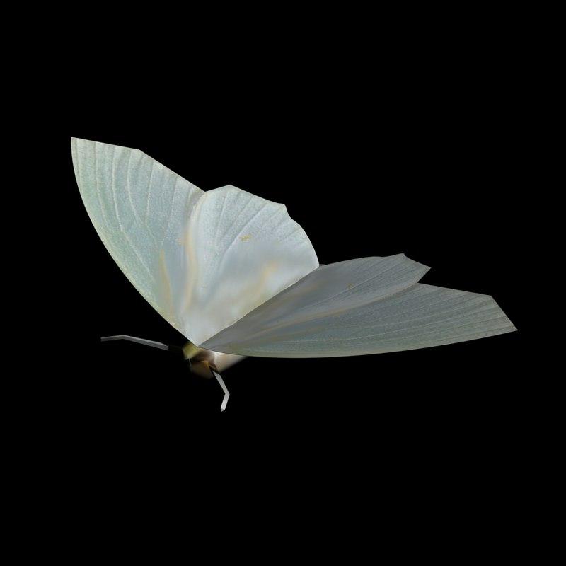 pale moth max