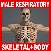 Male Respiratory Skeletal Body Pack V04 (Textured)