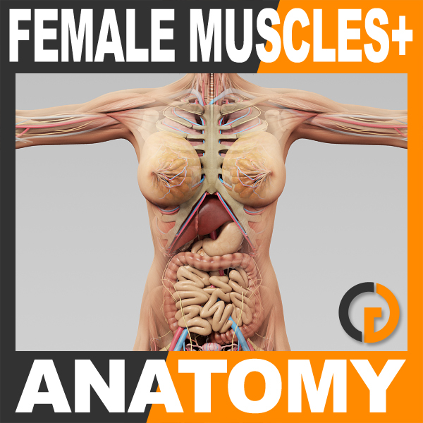 3ds max human female anatomy -