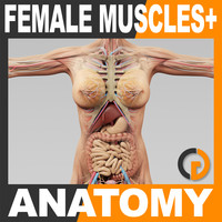 Human Female Anatomy - Body, Muscles, Skeleton and Internal Organs